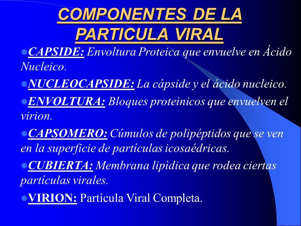 COMPONENTES DE LA PARTICULA VIRAL