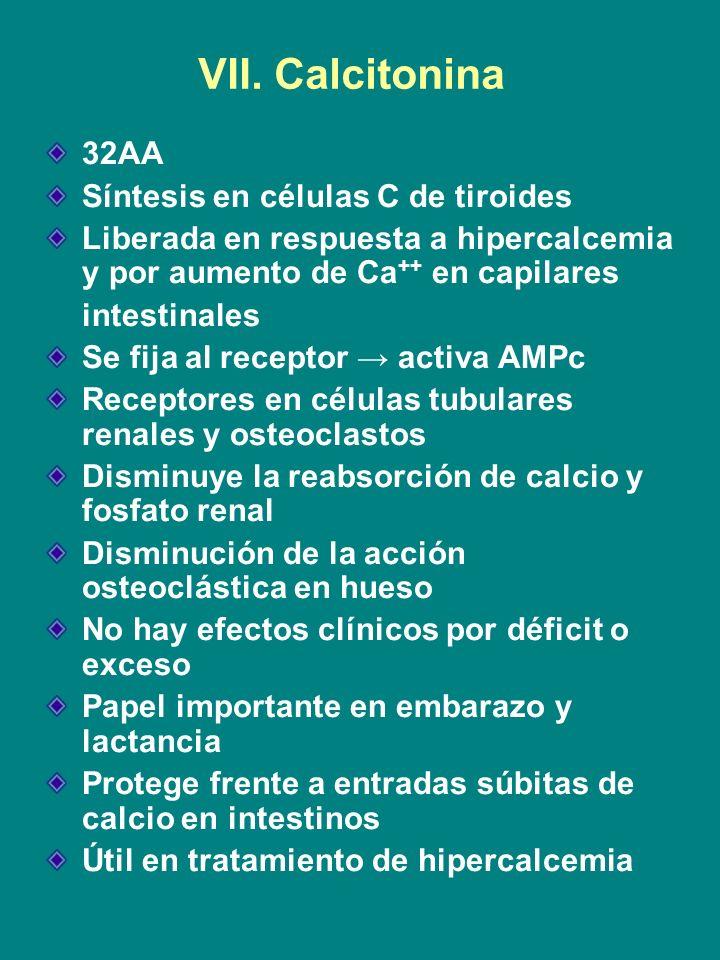 VII. Calcitonina 32AA Síntesis en células C de tiroides