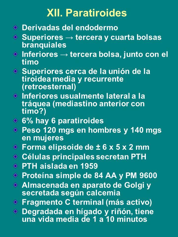 XII. Paratiroides Derivadas del endodermo