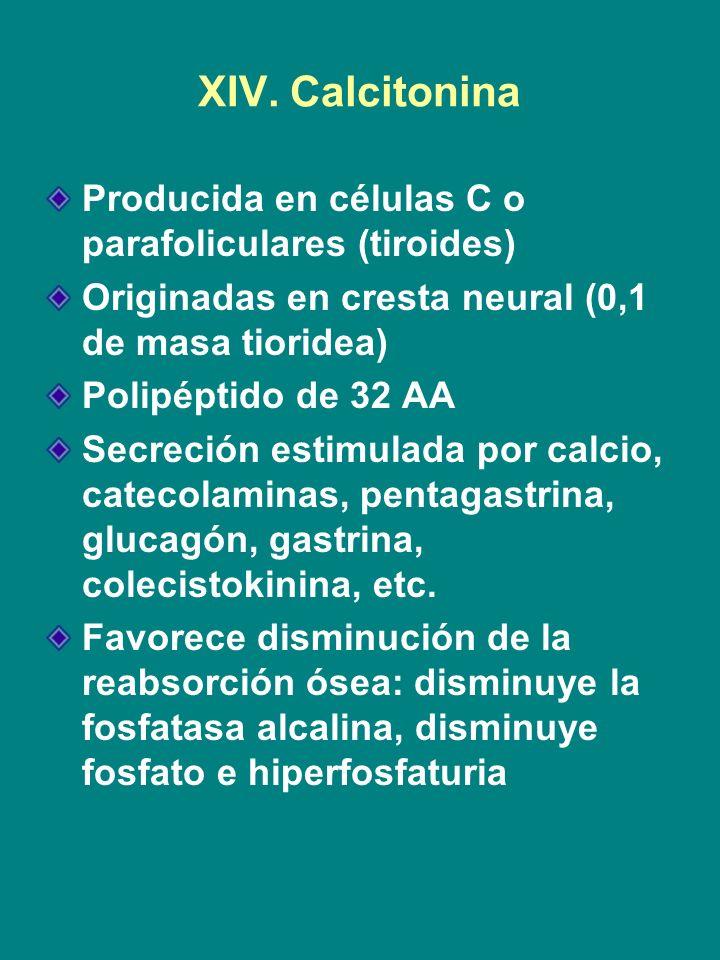 XIV. Calcitonina Producida en células C o parafoliculares (tiroides)