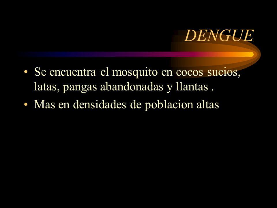 DENGUESe encuentra el mosquito en cocos sucios, latas, pangas abandonadas y llantas .