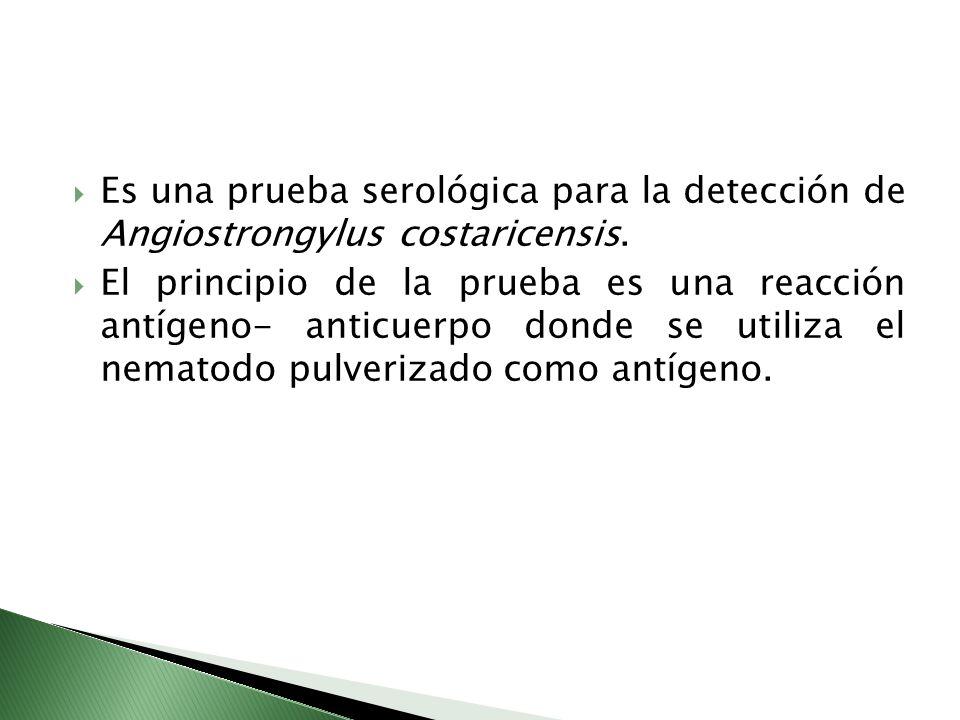 Es una prueba serológica para la detección de Angiostrongylus costaricensis.