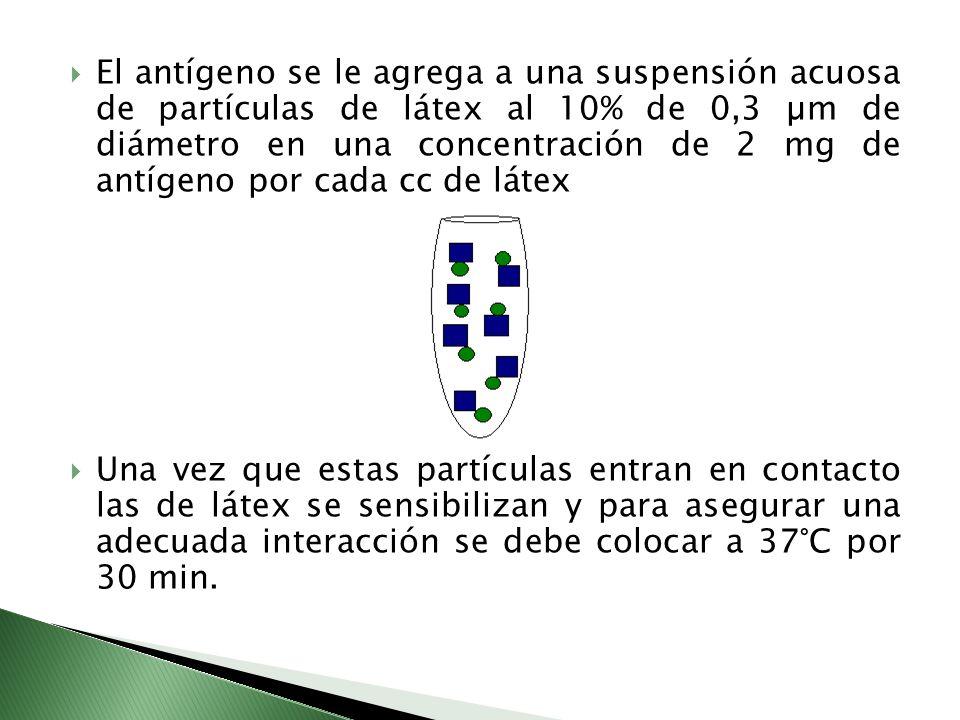 El antígeno se le agrega a una suspensión acuosa de partículas de látex al 10% de 0,3 µm de diámetro en una concentración de 2 mg de antígeno por cada cc de látex