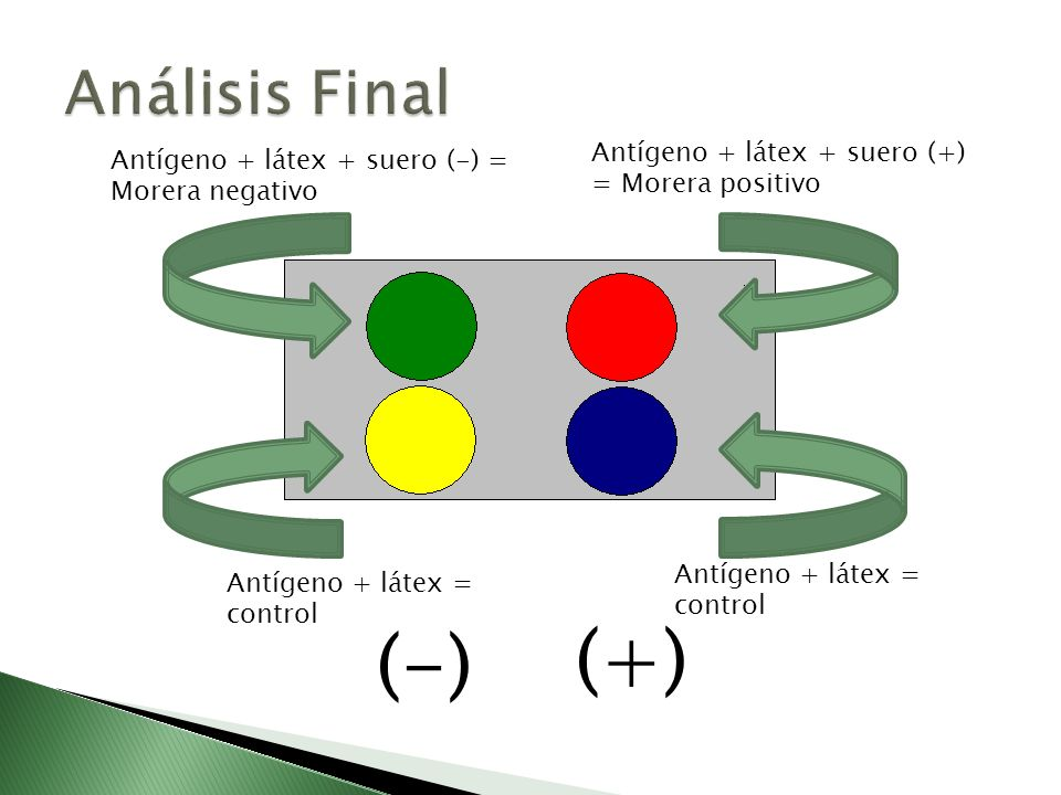 (+) Análisis Final (-) Antígeno + látex + suero (+) = Morera positivo