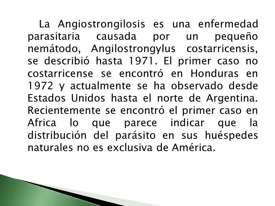 La Angiostrongilosis es una enfermedad parasitaria causada por un pequeño nemátodo, Angilostrongylus costarricensis, se describió hasta 1971.