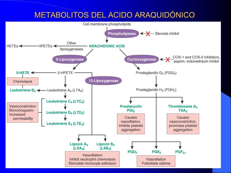 METABOLITOS DEL ACIDO ARAQUIDÓNICO