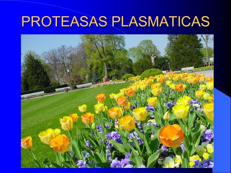 PROTEASAS PLASMATICAS