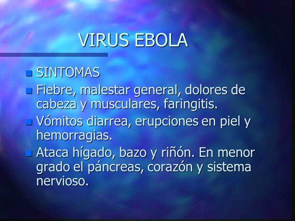 VIRUS EBOLA SINTOMAS. Fiebre, malestar general, dolores de cabeza y musculares, faringitis. Vómitos diarrea, erupciones en piel y hemorragias.