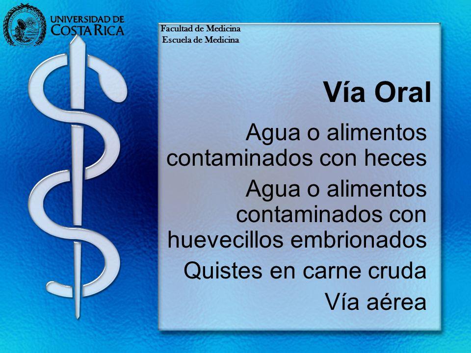 Vía Oral Agua o alimentos contaminados con heces