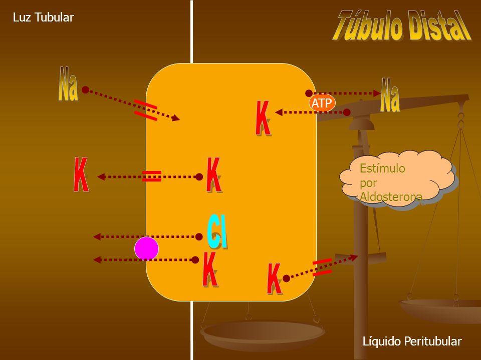 Na Na K K K Cl K K Túbulo Distal Luz Tubular ATP
