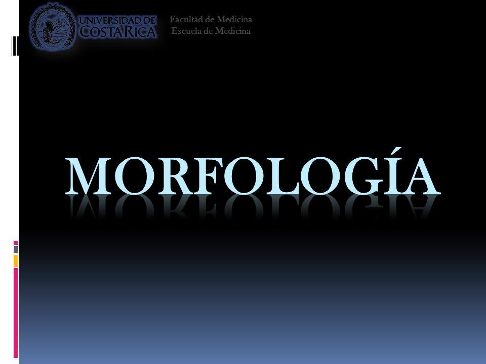 Facultad de Medicina Escuela de Medicina Morfología 2008