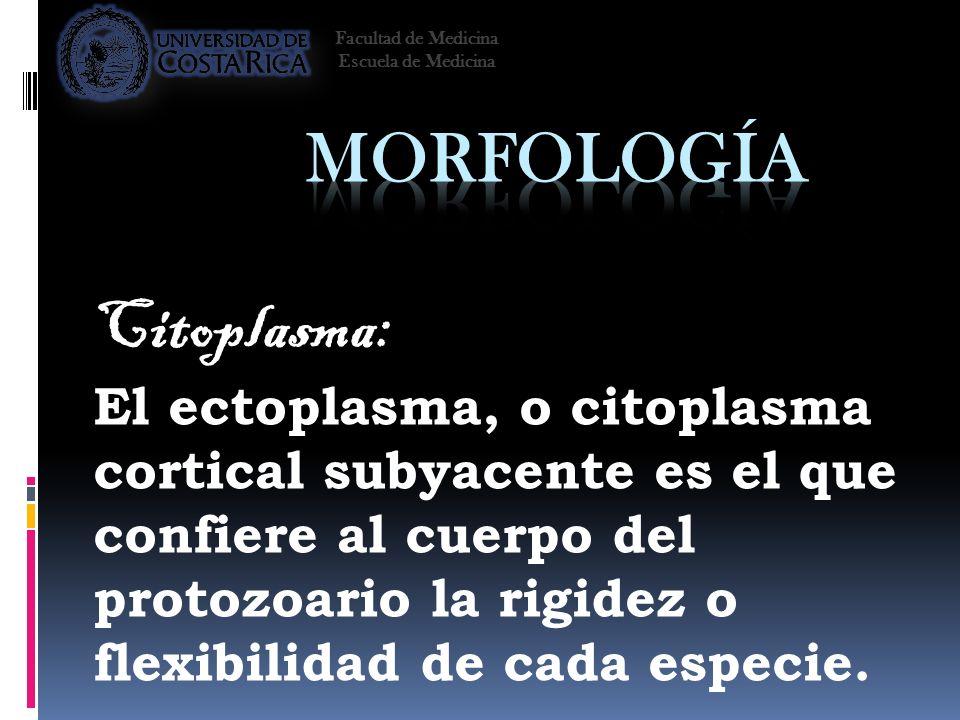 Morfología Citoplasma: