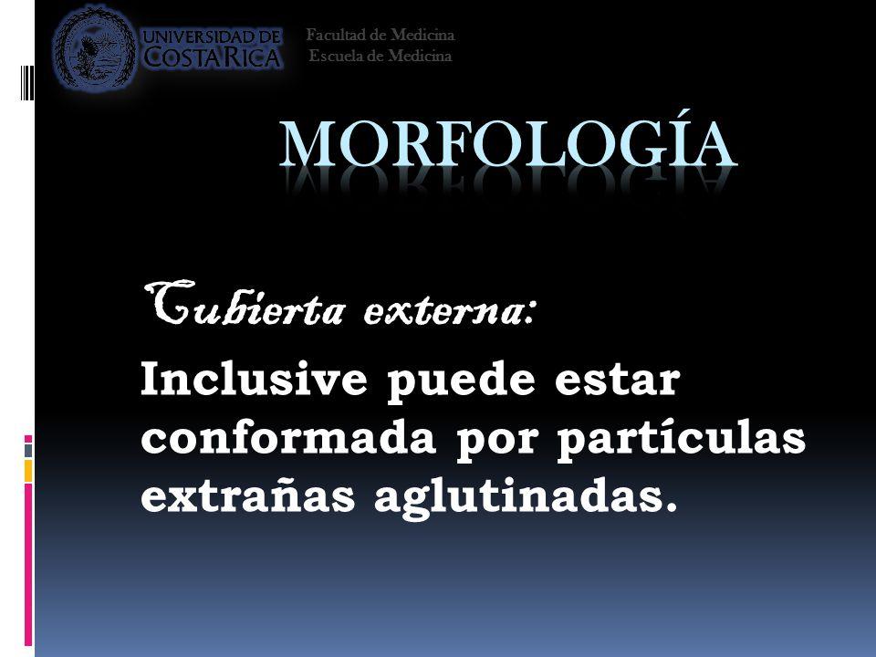 Morfología Cubierta externa: