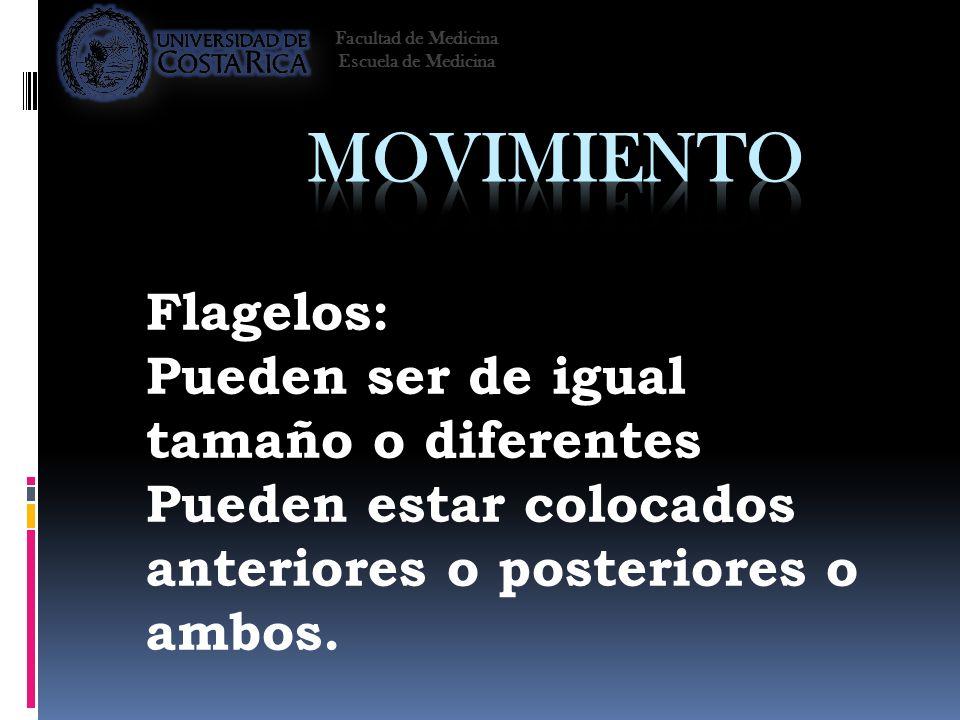 Movimiento Flagelos: Pueden ser de igual tamaño o diferentes