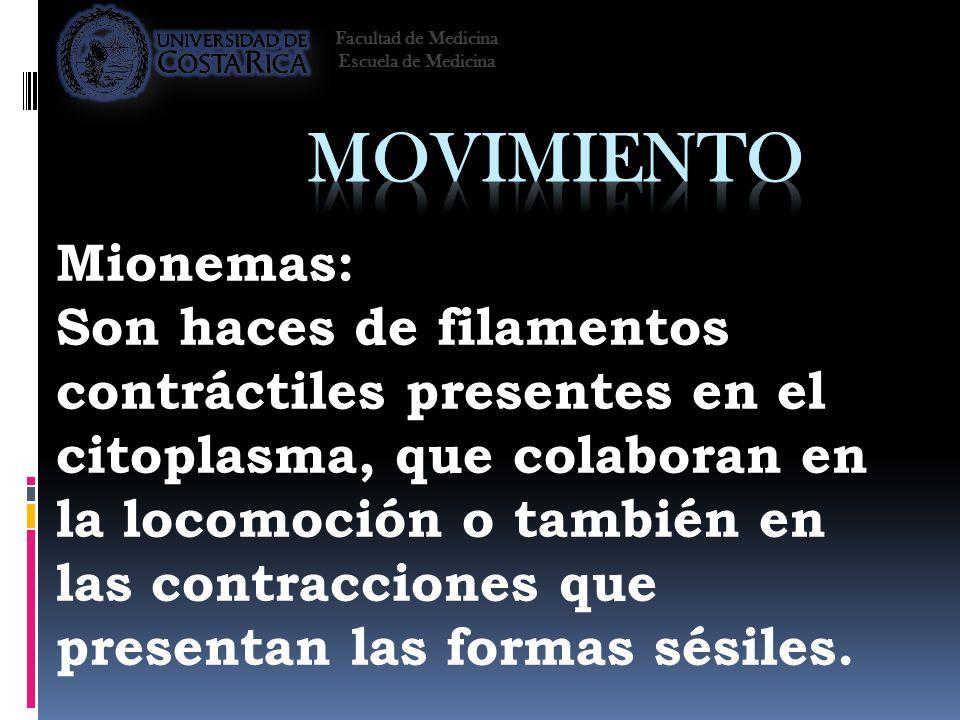 Facultad de Medicina Escuela de Medicina. Movimiento. Mionemas: