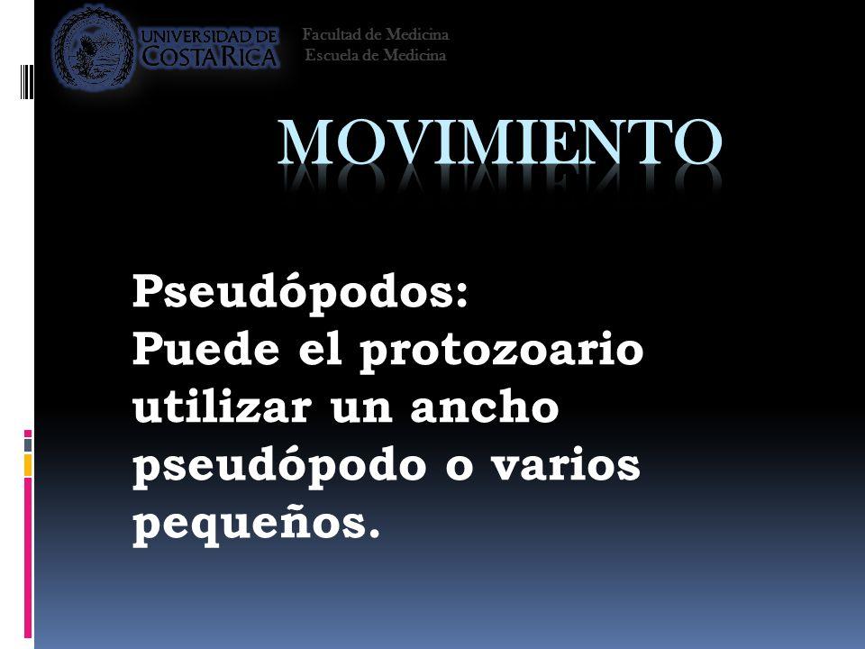 Movimiento Pseudópodos: