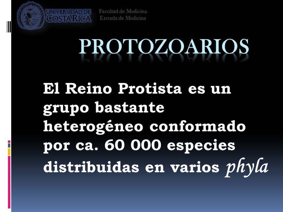 Facultad de Medicina Escuela de Medicina. Protozoarios.