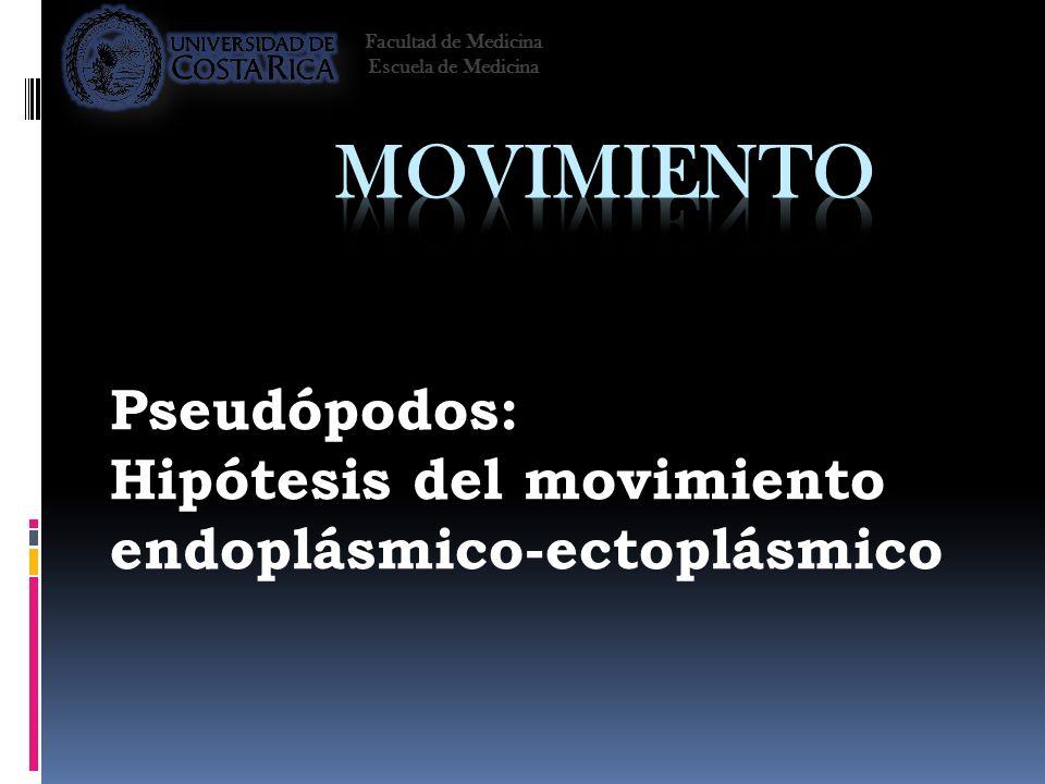 Pseudópodos: Hipótesis del movimiento endoplásmico-ectoplásmico