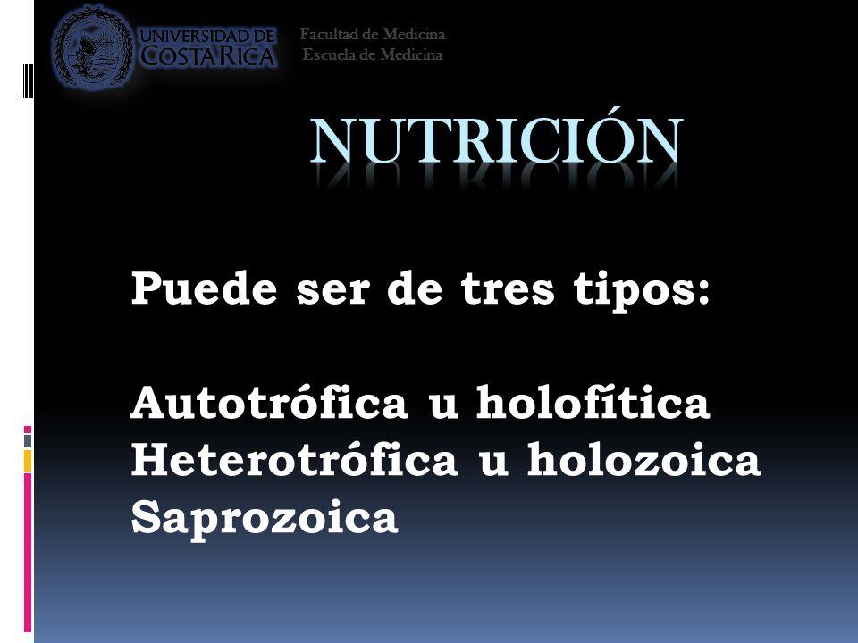 Nutrición Puede ser de tres tipos: Autotrófica u holofítica