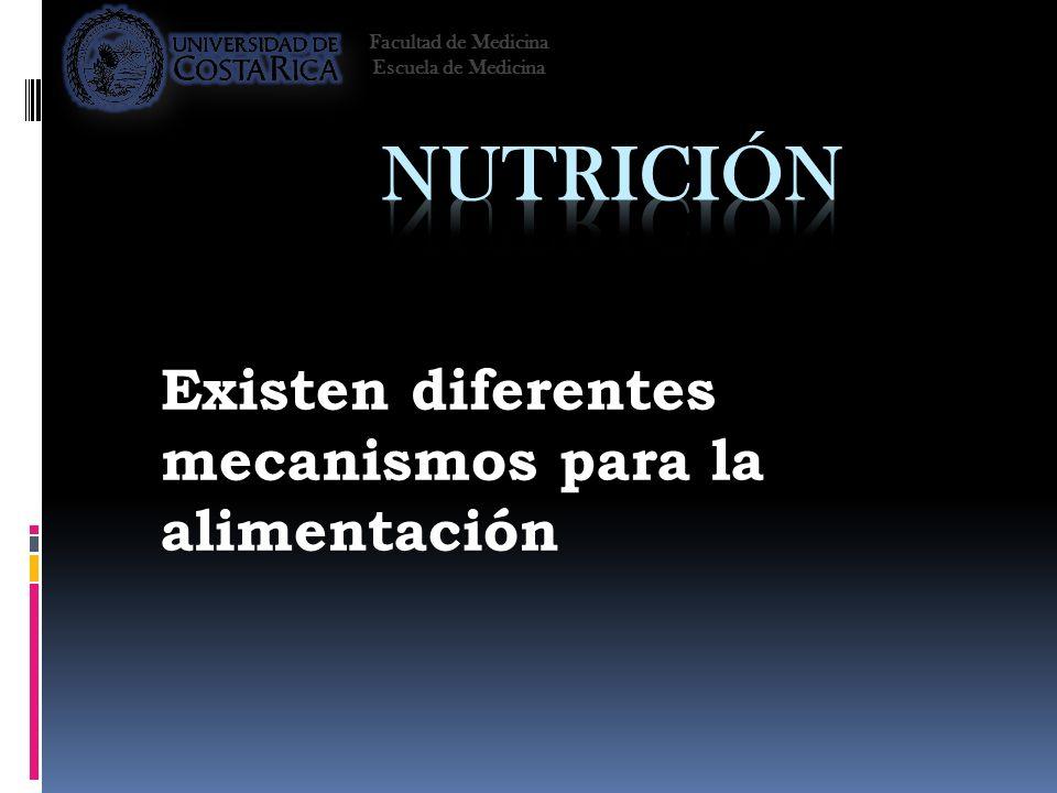 Existen diferentes mecanismos para la alimentación