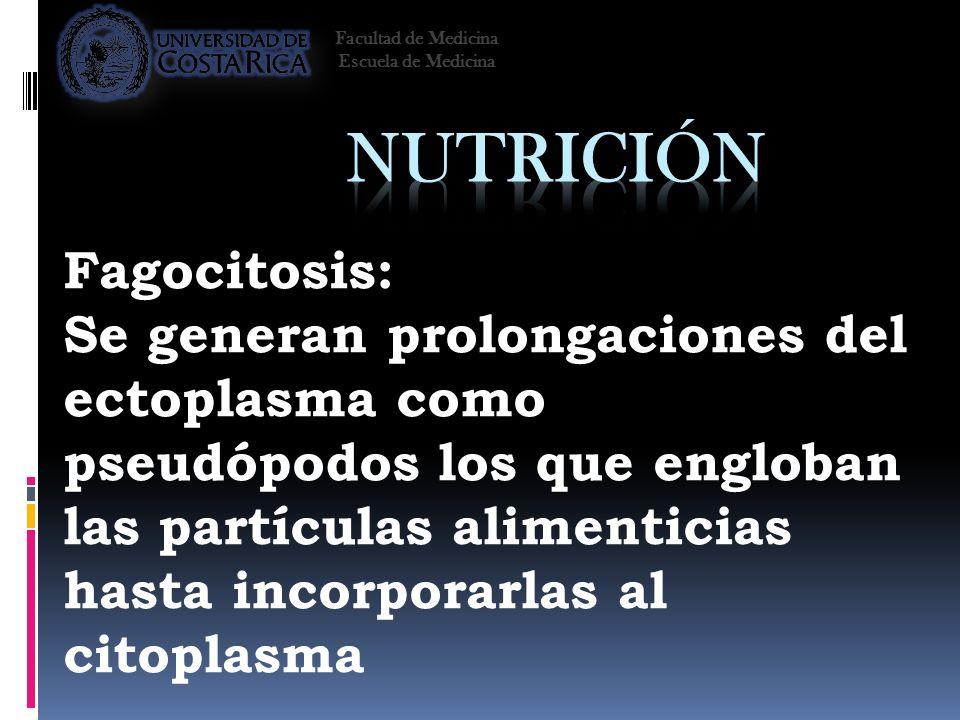 Nutrición Fagocitosis: