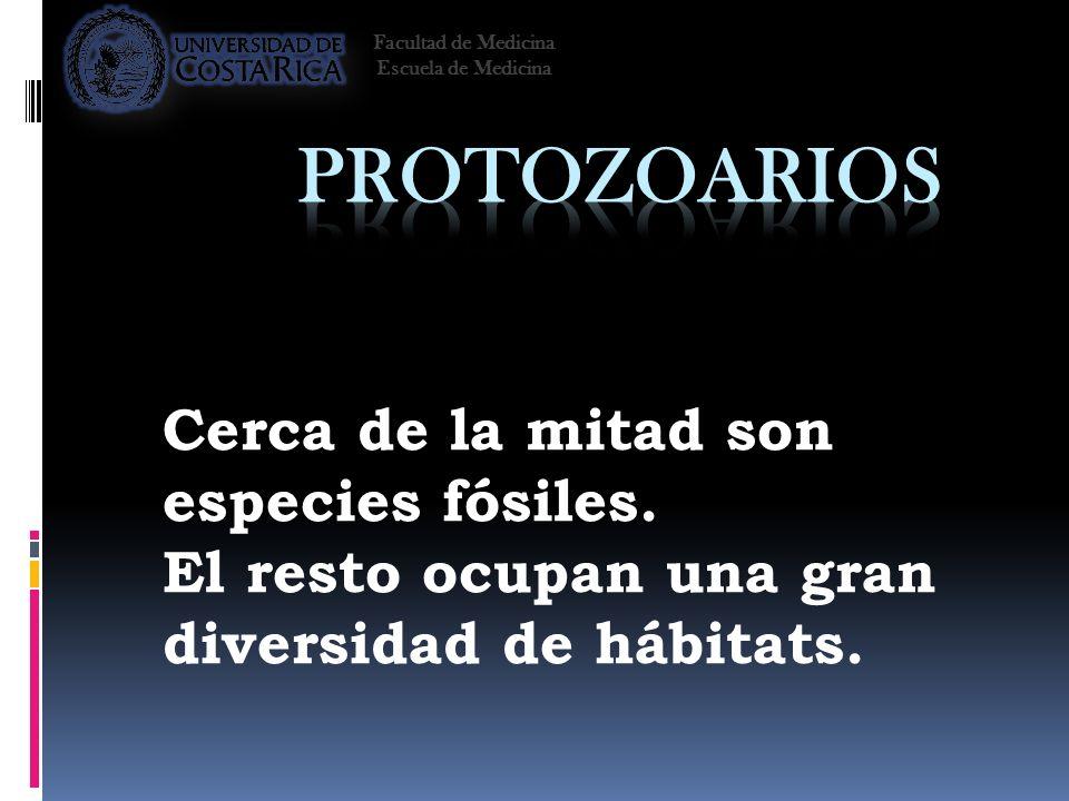 Protozoarios Cerca de la mitad son especies fósiles.