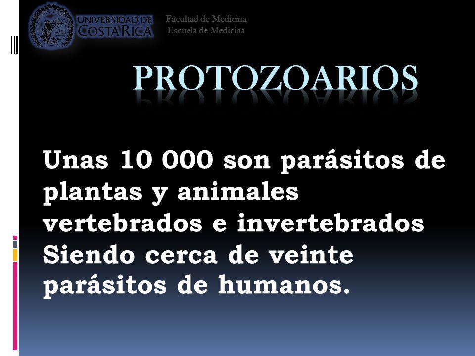 Facultad de Medicina Escuela de Medicina. Protozoarios. Unas 10 000 son parásitos de plantas y animales vertebrados e invertebrados.