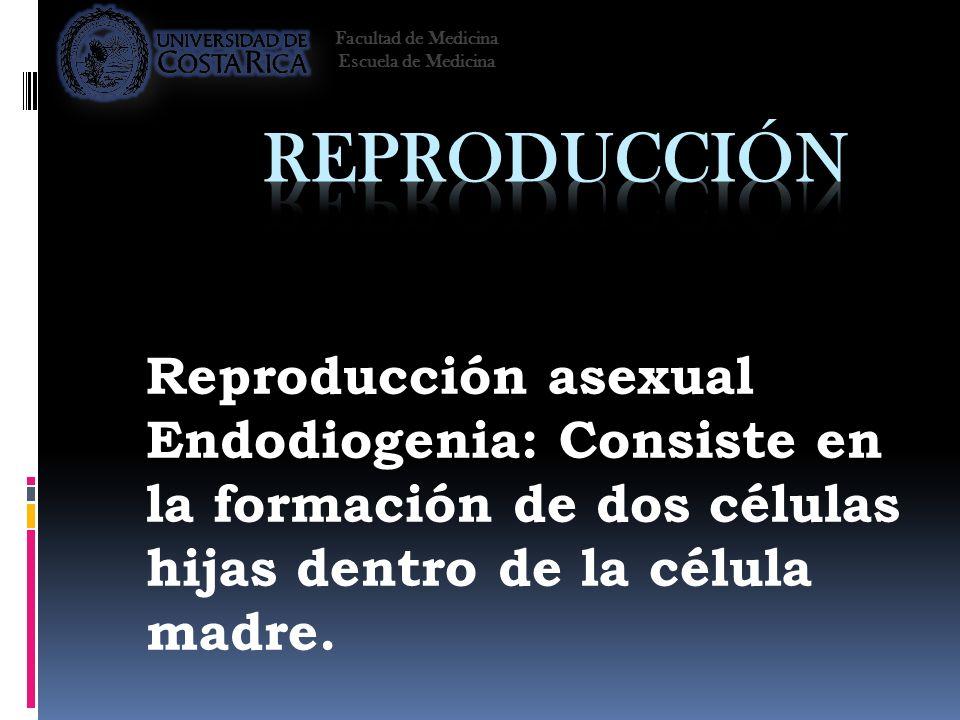 Reproducción Reproducción asexual