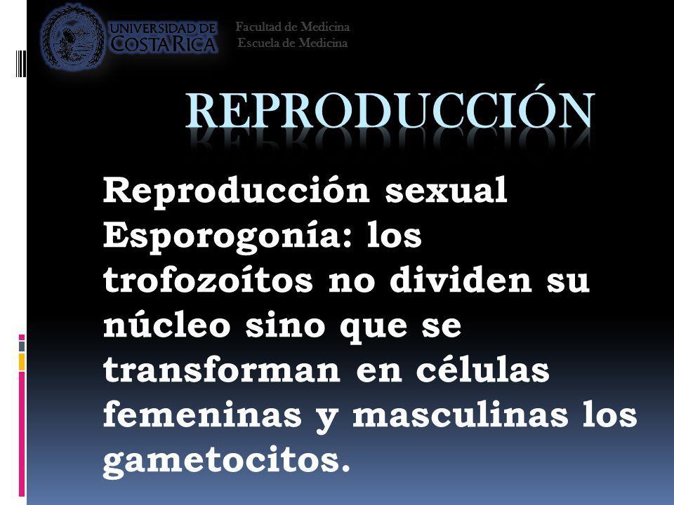 Reproducción Reproducción sexual