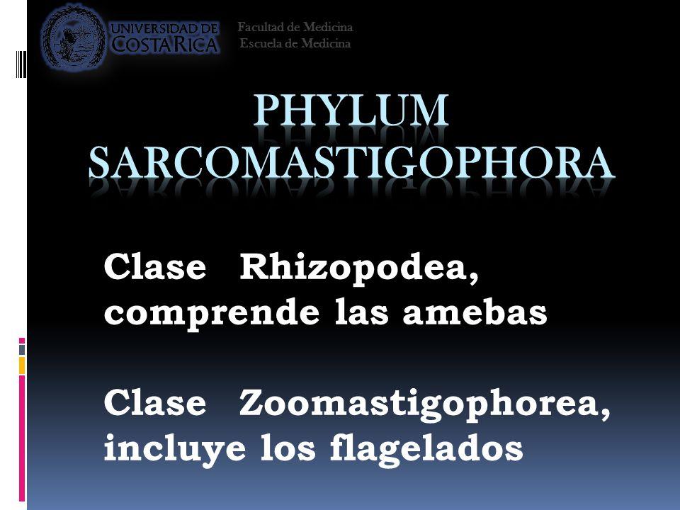 Phylum Sarcomastigophora