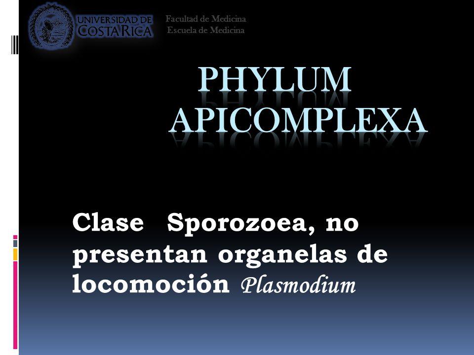 Clase Sporozoea, no presentan organelas de locomoción Plasmodium