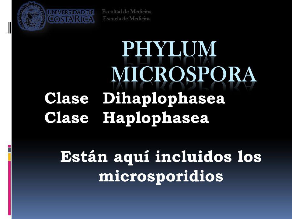 Están aquí incluidos los microsporidios