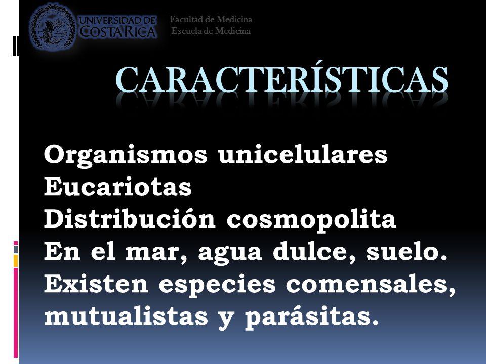 Características Organismos unicelulares Eucariotas