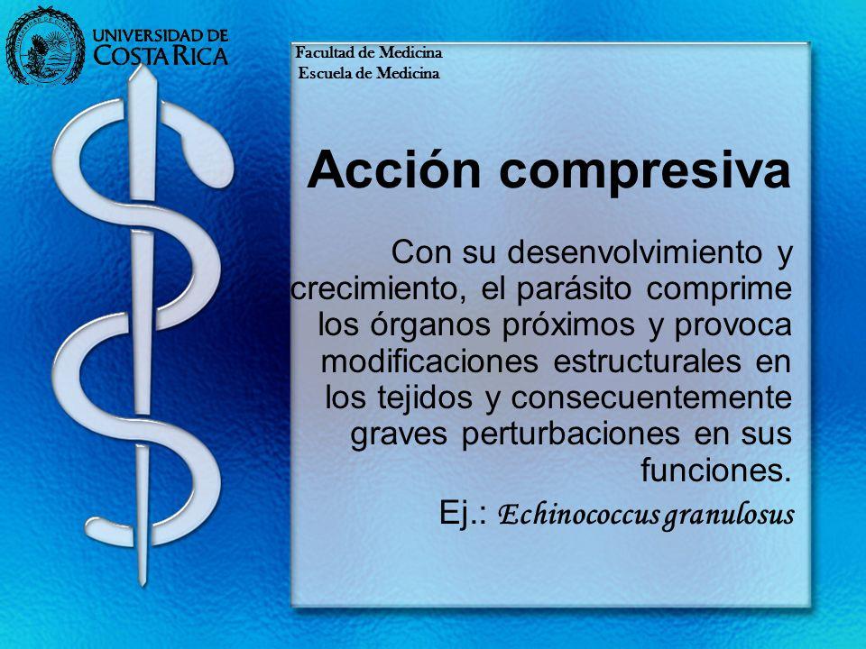 Facultad de MedicinaEscuela de Medicina. Acción compresiva.