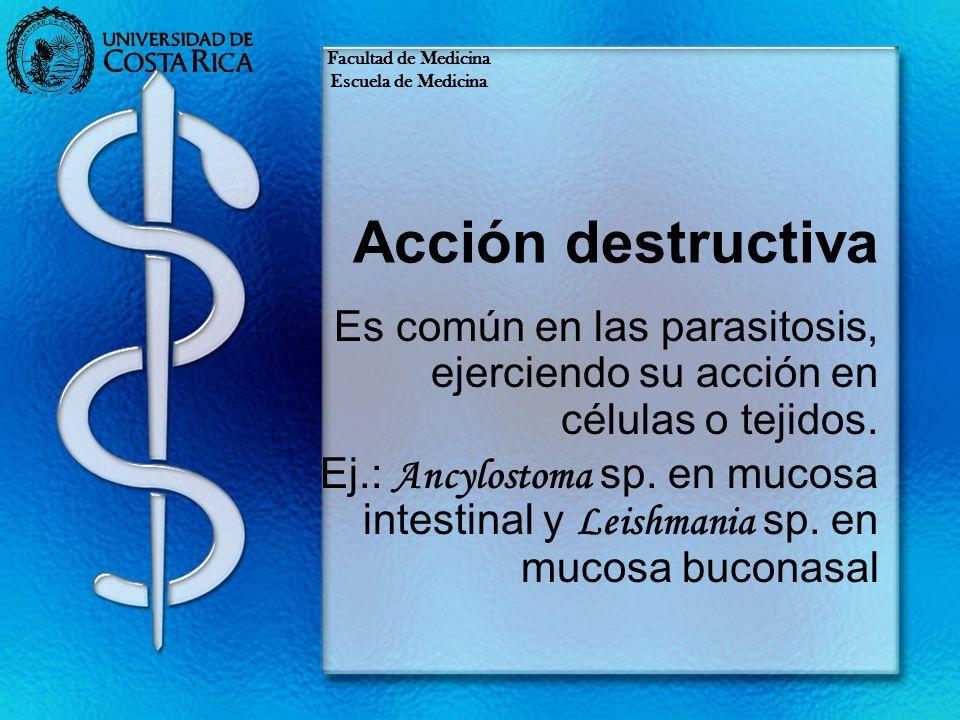 Facultad de Medicina Escuela de Medicina. Acción destructiva. Es común en las parasitosis, ejerciendo su acción en células o tejidos.