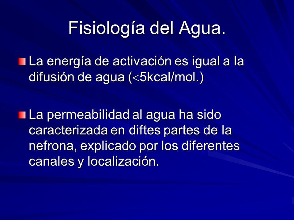 Fisiología del Agua. La energía de activación es igual a la difusión de agua (5kcal/mol.)