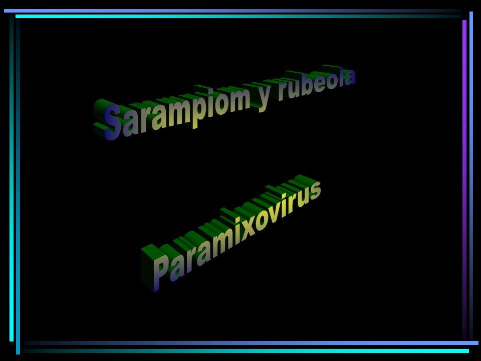 Sarampiom y rubeola Paramixovirus