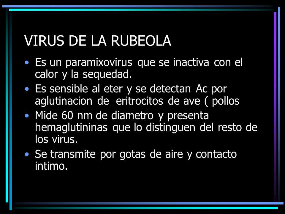 VIRUS DE LA RUBEOLA Es un paramixovirus que se inactiva con el calor y la sequedad.