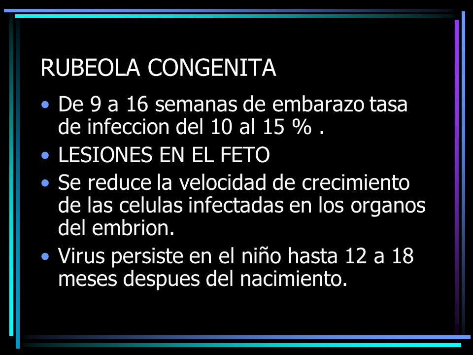 RUBEOLA CONGENITA De 9 a 16 semanas de embarazo tasa de infeccion del 10 al 15 % . LESIONES EN EL FETO.