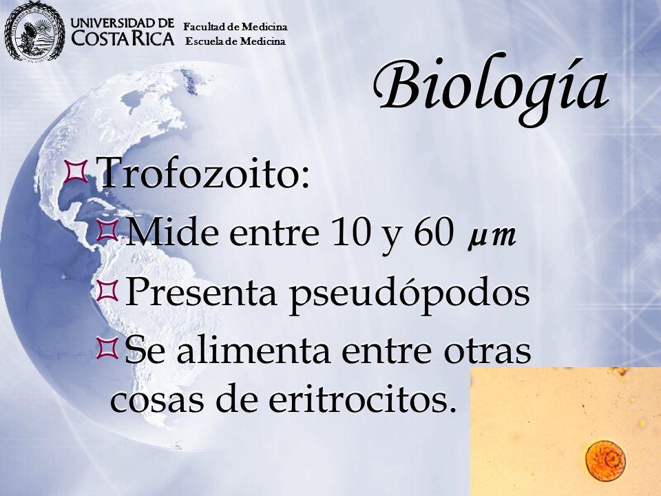 Biología Trofozoito: Mide entre 10 y 60 µm Presenta pseudópodos