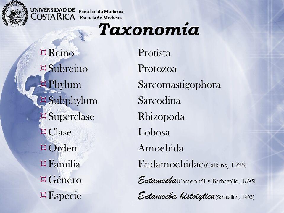 Taxonomía Reino Protista Subreino Protozoa Phylum Sarcomastigophora