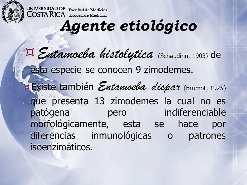Facultad de Medicina Escuela de Medicina. Agente etiológico. Entamoeba histolytica (Schaudinn, 1903) de esta especie se conocen 9 zimodemes.