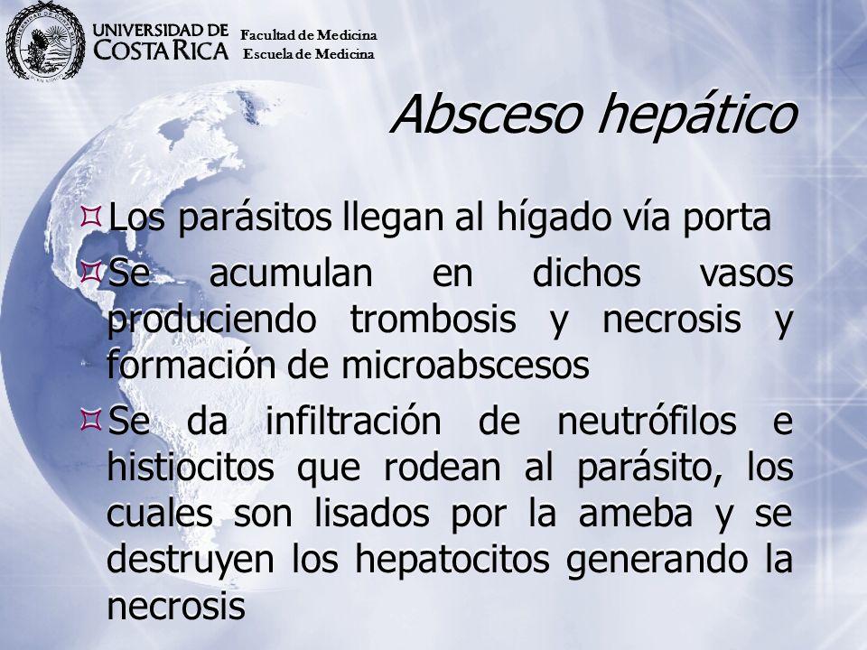 Absceso hepático Los parásitos llegan al hígado vía porta