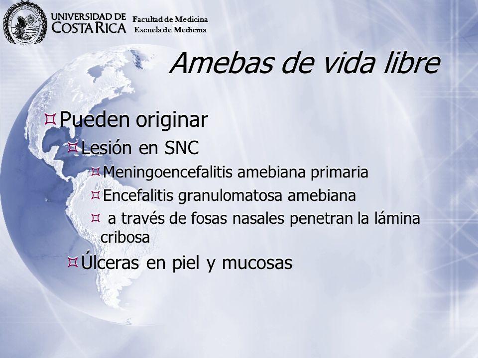 Amebas de vida libre Pueden originar Lesión en SNC