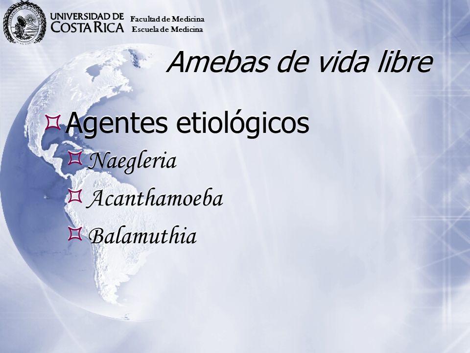 Amebas de vida libre Agentes etiológicos Naegleria Acanthamoeba