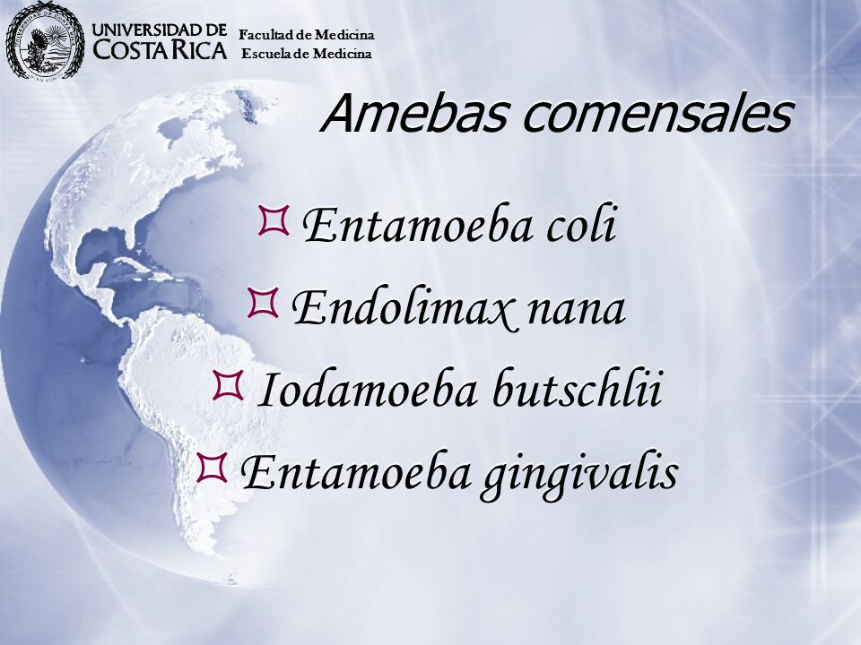 Entamoeba coli Endolimax nana Iodamoeba butschlii Entamoeba gingivalis