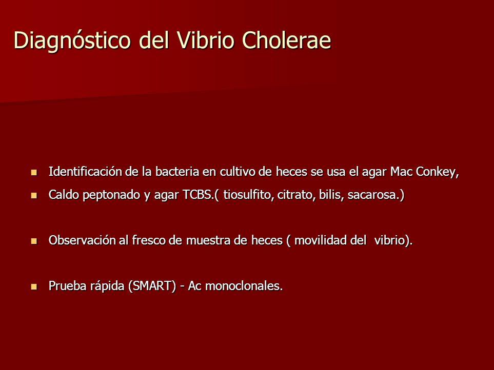 Diagnóstico del Vibrio Cholerae