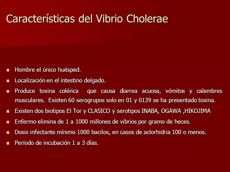 Características del Vibrio Cholerae