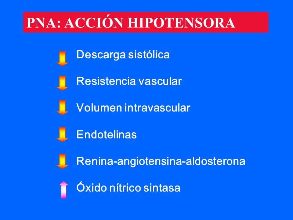 PNA: ACCIÓN HIPOTENSORA