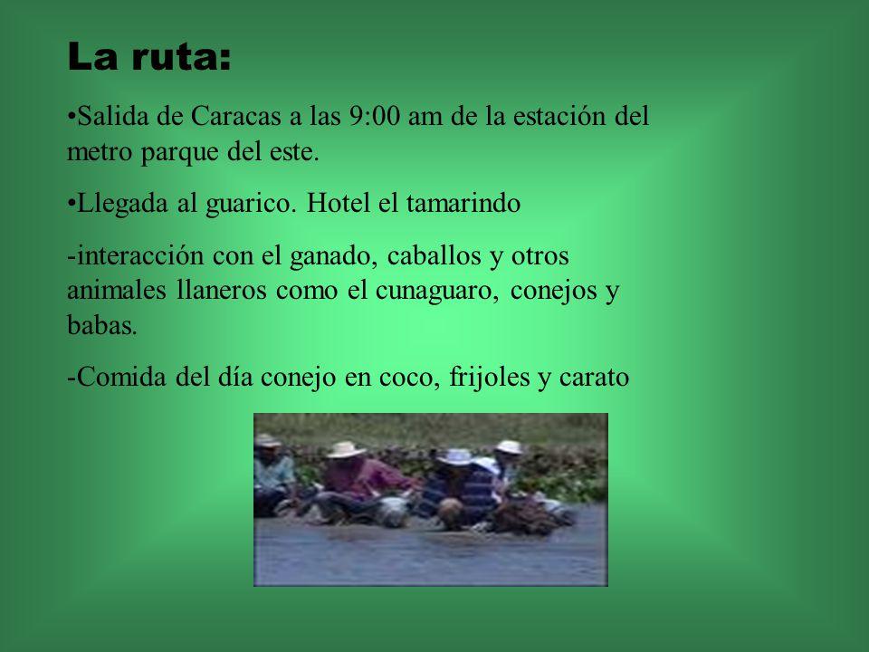 La ruta: Salida de Caracas a las 9:00 am de la estación del metro parque del este. Llegada al guarico. Hotel el tamarindo.